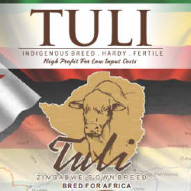 Tuli-Cattle-Society-logo